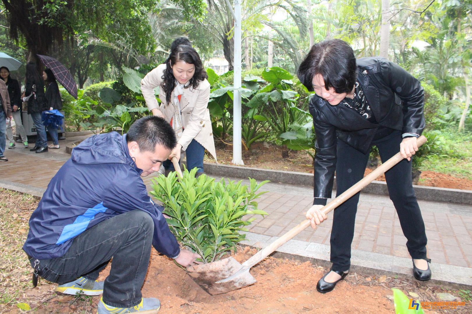 发现动物公园种树